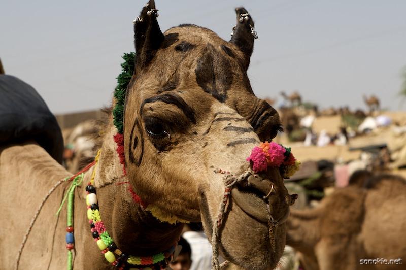 camel earrings