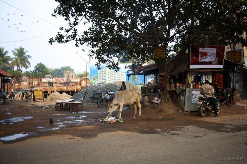 cow and condo
