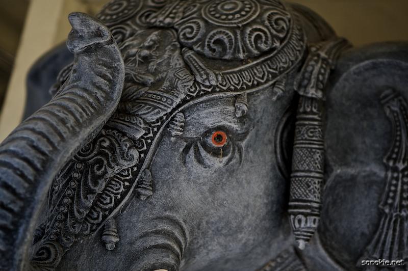 orange eye elephant