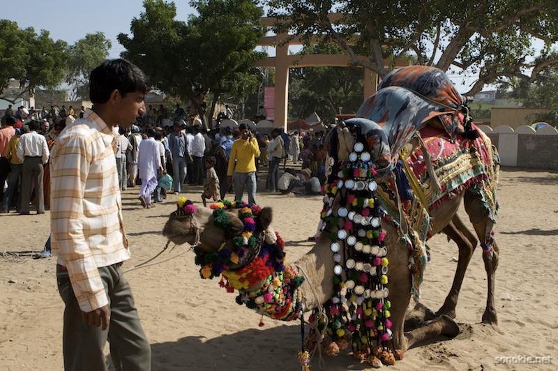 fancy camel