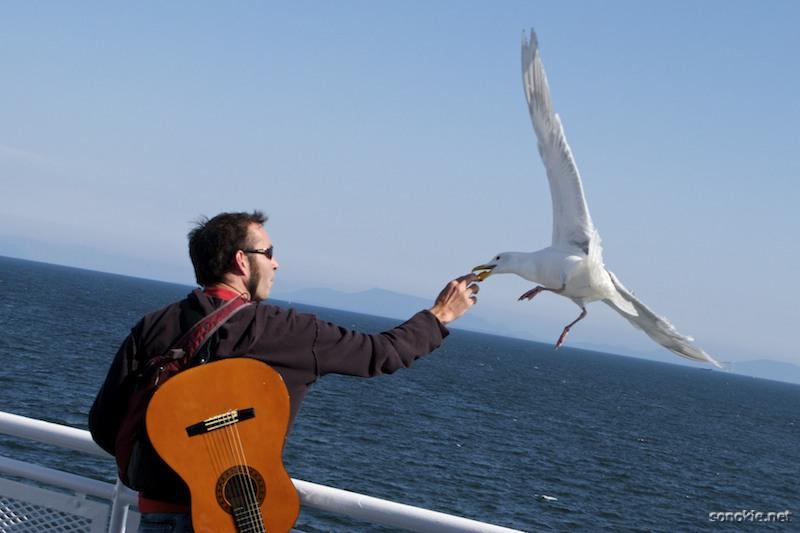 feeding the gull